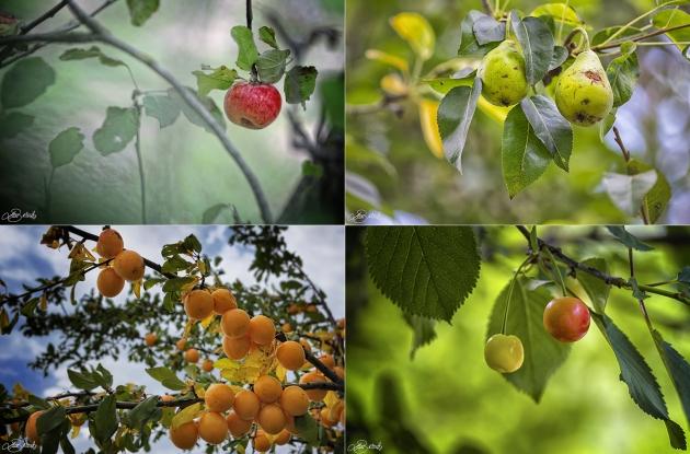 Frutta selvatica